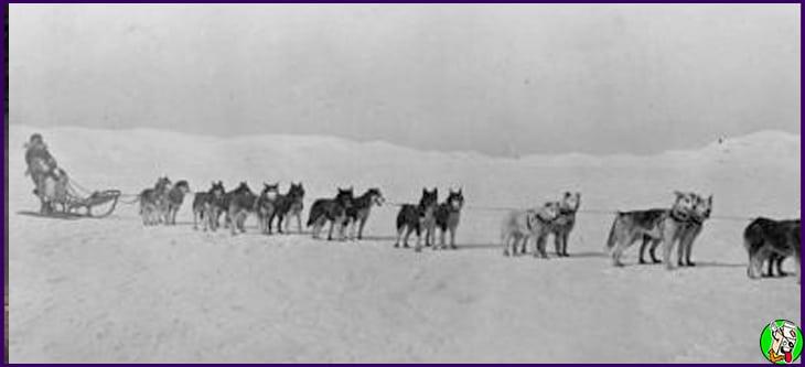 scott y amundsen la carrera al polo sur