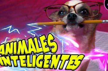 Top 5 Animales inteligentes