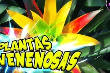 Top 5 Plantas venenosas